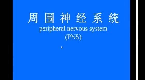 可看总数时长/页数图片-系统解剖学课件 系统解剖学ppt课件 系统解剖